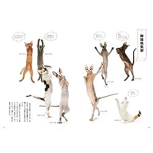 猫のコラム 猫 Cats Cat ときめく猫図鑑