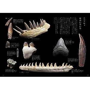 化石手帖 宝石 歯
