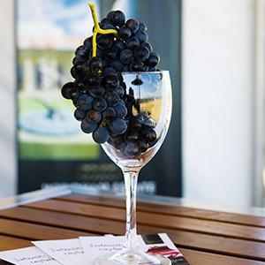 Wyndham Grape Image