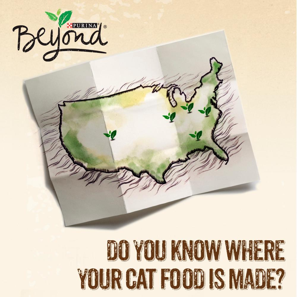 Why Is Corn Added To Cat Food