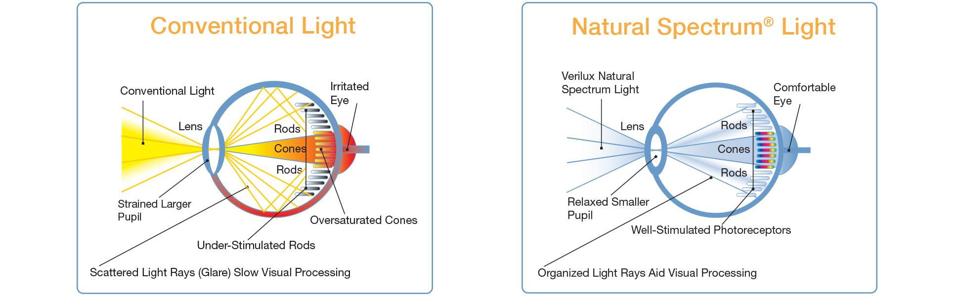 Verilux Easyflex Natural Spectrum Deluxe Floor Lamp With