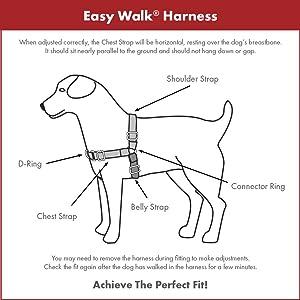 dog, dogs, walk, training, pulling, lead