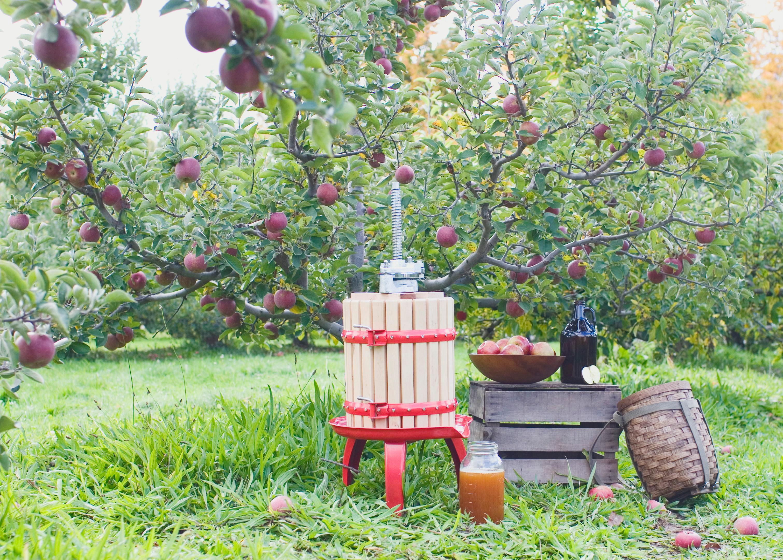 Fruit crusher grape apple crusher grinder for grape apple fruit - View Larger Read More Even Presses Hard Fruits Like Apples