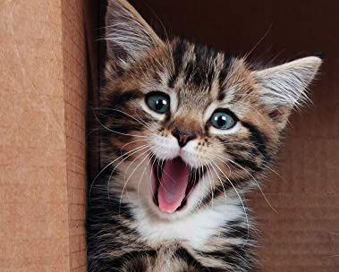 Cat Food Delivered