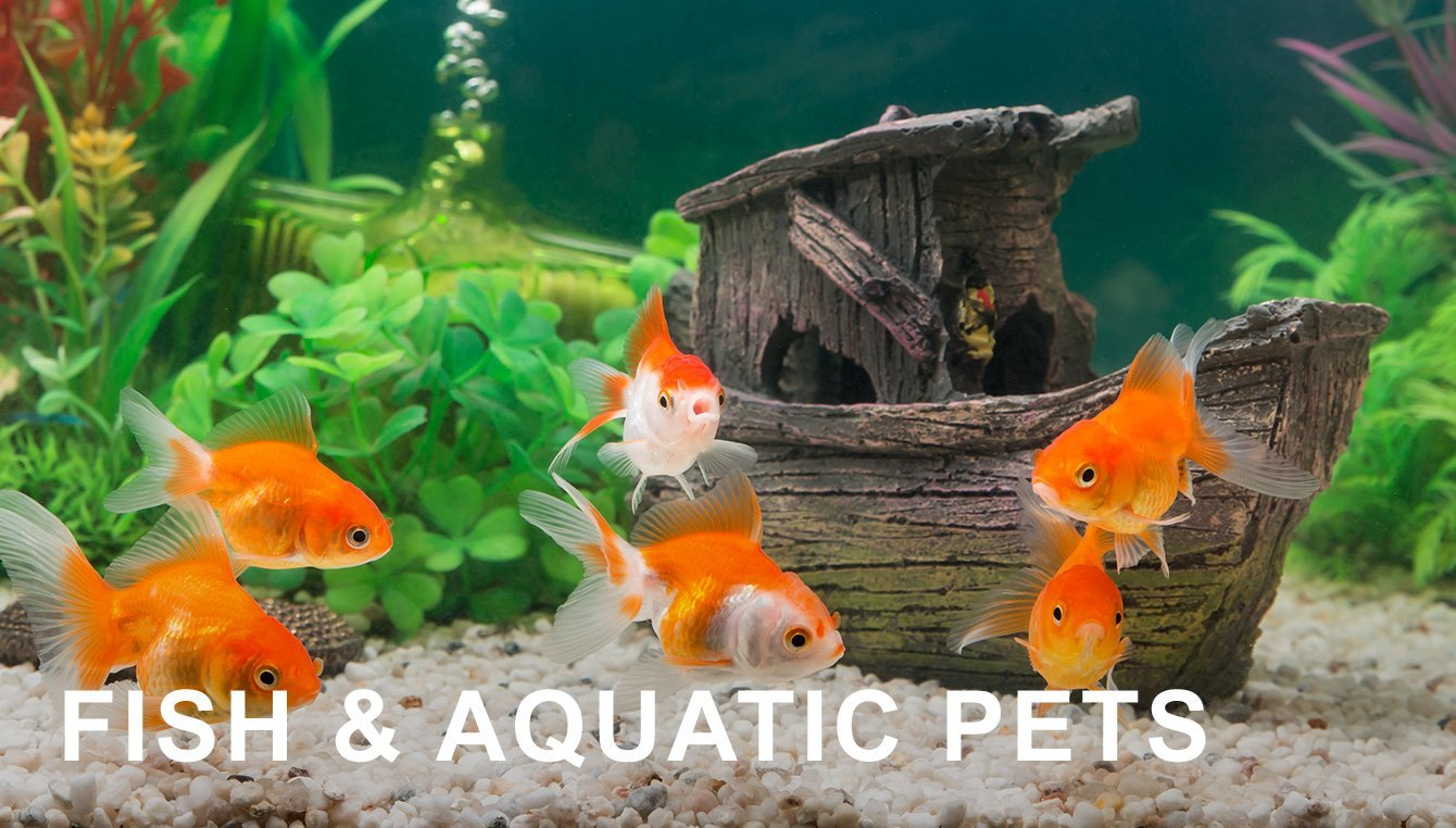 Fish & Aquatic Pets