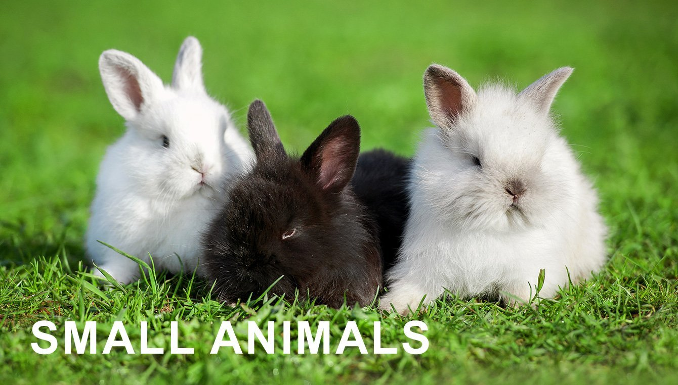 Small Animals