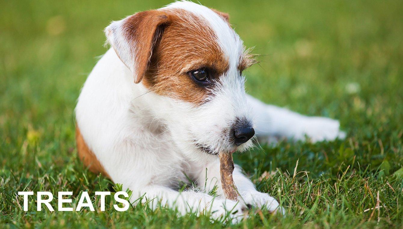 amazon ca dog supplies dog beds toys collars houses