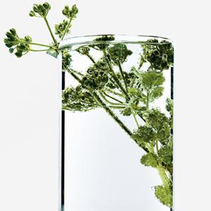 Coriandolo,Coriandoli,ingrediente,naturale,ingredienti,naturali,capelli,capello,fragile,fragili