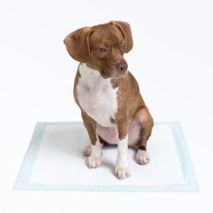 toallitas para mascotas