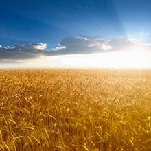 cereales, cereales integrales, cereales desayuno, arroz, trigo, trigo integral, maíz