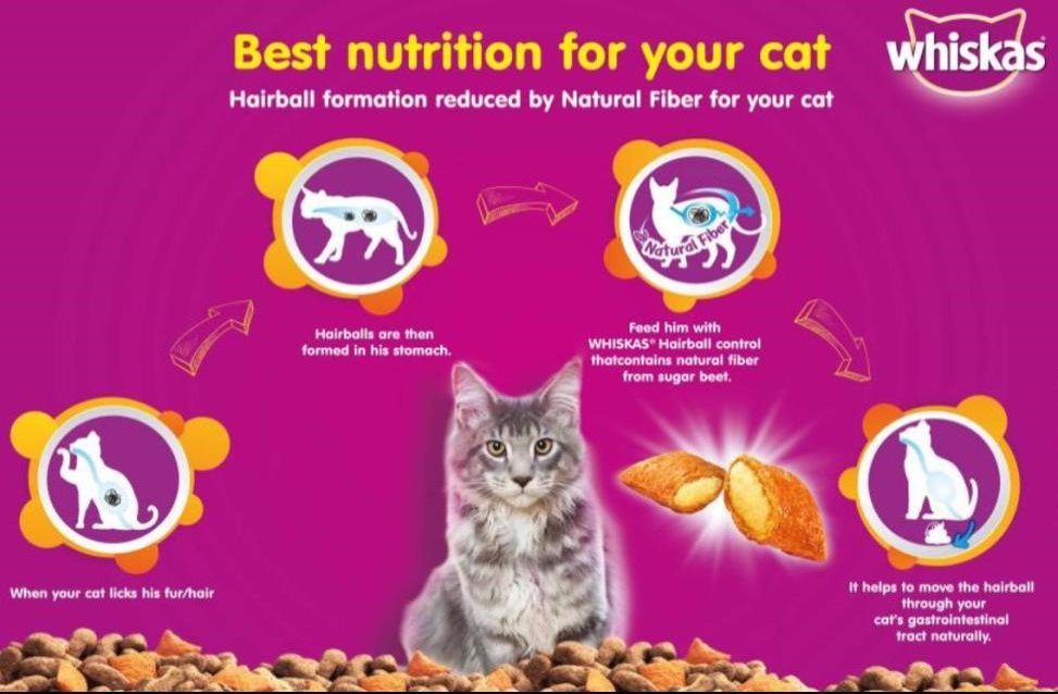 Cat Food Increase Weight