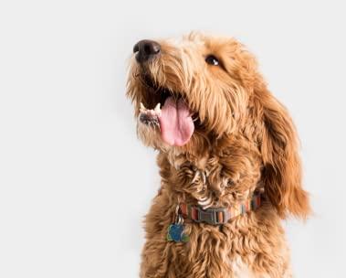 Produtos para cães até R$50