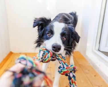 Melhores avaliados do Pet Shop