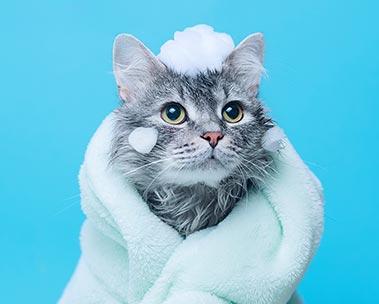 Produtos para gato até R$30