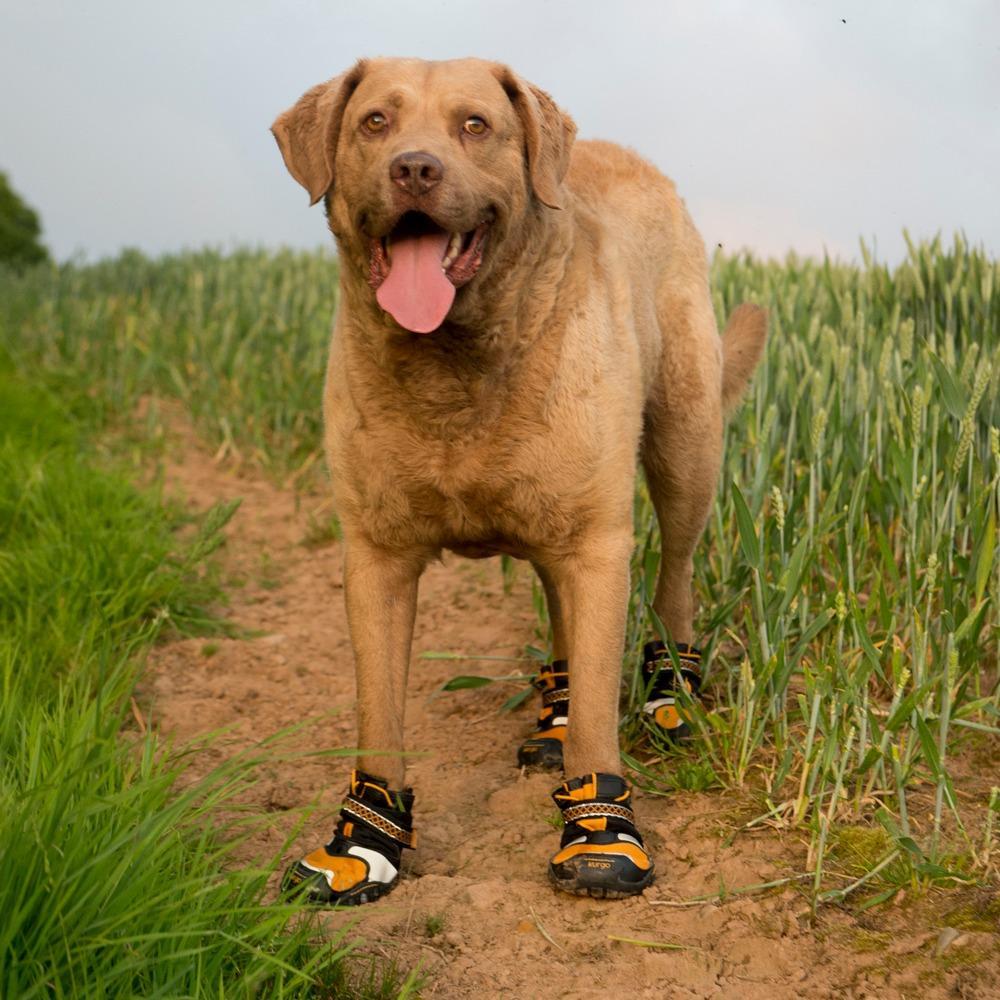Kurgo Step N Strobe Tm Dog Boots Set Of 4 Dog Shoes X