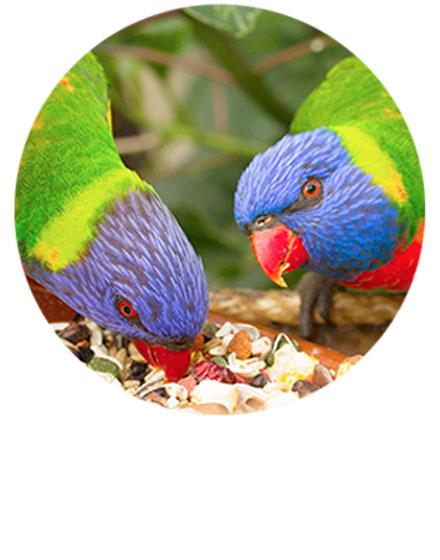 Comida para Aves Domésticas