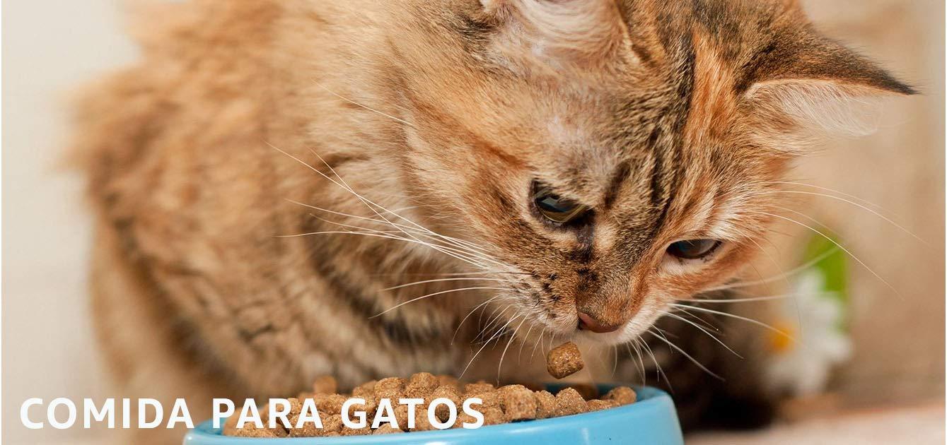 comid para gatos