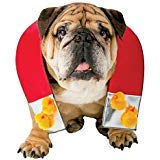 Rasta Imposta Zelda Chick Magnet Dog Outfit Funny Theme Halloween Pet Costume, XL/XXL -
