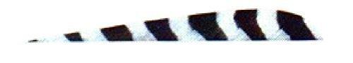 Trueflight 1c 4 Gray Bar Rw Trueflight Feathers by TRUEFLIGHT MFG CO INC