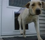"Storm Door Pet Door - Small/Medium (7"" x 9"") - White Alum..."