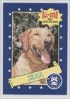 Silka (Trading Card) 1992 All Star Drug Detecting Dogs - [Base] #21
