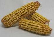 Wagner S Cob Corn Premium Wildlife Product