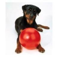 company-of-animals-10-boomer-ball-virtually-indestructible-dog-toy