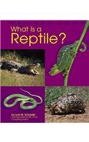 Read Online What Is a Reptile? (The Animal Kingdom) pdf