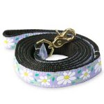 Up Country Daisy Lead Width product image
