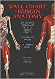 img - for Wall Chart Of Human Anatomy - 3d Dull-body Images And Detailed System Charts book / textbook / text book