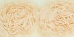 Kaisercraft Ribbon, Roses, Large Cream 8 ()