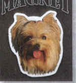 Terrier Auto Car - Yorkshire Terrier Auto Car Magnet