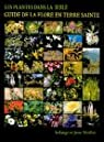 Les plantes dans la Bible : Guide de la flore en Terre Sainte par Maillat