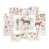 Equine Anatomy Charts - Complete Set of 13 Charts Special Offer