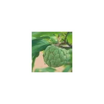30 Seeds Tropical Asian Thai Custard Apple Fruit Tree: Toys & Games