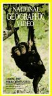 review of among the wild chimpanzees Chimpanzee tool use chimpanzees  and chimpanzees among the primates considered as the most advanced,  you can make it easier for us to review and,.
