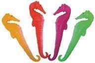 Aqua World Dive Seahorses