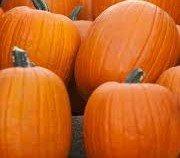 Jack O Lantern Pumpkin Seeds- 30 Seeds