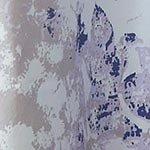 Company C Aria Shower Curtain, Spa