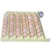 GQF Incubator Turner for Chicken Eggs