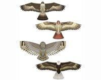 Brainstorm Flying Colors FC80890 Birds of Prey Kite Assortment (12 Piece) by Brainstorm