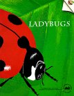 Gem Ladybug - 1