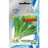 Parsley (2500 Seeds)Quality Seeds - 1 Package From Chai Tai, Thailand