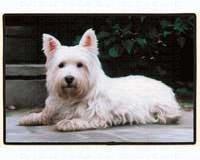 Animal World - Westie On The Porch Doormat