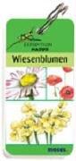 Expedition Natur - Wiesenblumen
