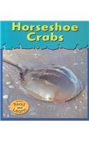 Horseshoe Crabs (Musty-crusty Animals) -