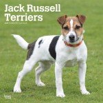 Russel Terriers Rock Jack - Quality 2019 Jack Russel Terrier Calendar with Free Rock Music MEMOROBILIA (Key Chain, Pen,Magnet,Card ETC.) Calendar Planner,Calendar Wall,Pocket, Monthly,DO IT All,Gallery Edition