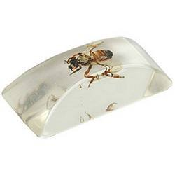 Fake Ice Cube with Bug