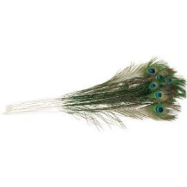 "25 Peacock USA Raised Peacock Feathers 18-24"" Long"
