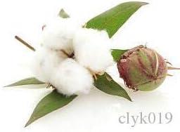 1 paquete original de 6pcs semillas de algodón, semillas interesantes jardinería doméstica